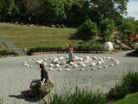 Byron Crystal Garden